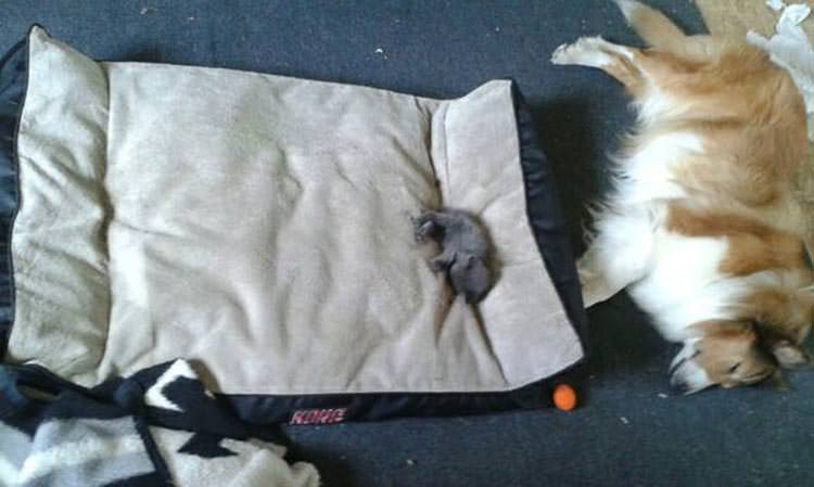 16 Cats That Stole Dog Beds And Didn T Have A Care In The