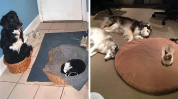 16 Cats That Stole Dog Beds And Didn't Have A Care In The World
