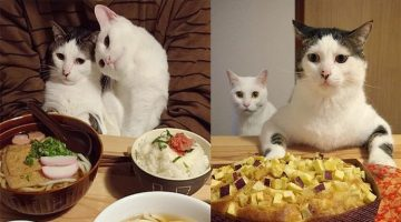 Japanese Couple Captures Every Moment of Their Cats Watching Them Eat