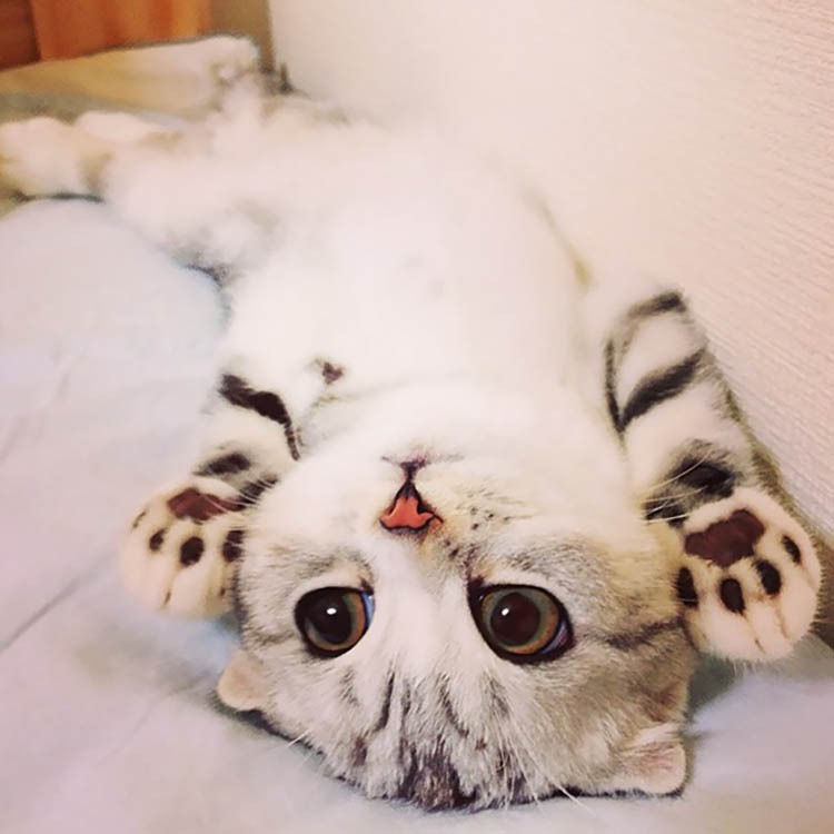 24 Pictures Of The Cutest Kittens Ever | Top13