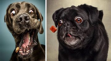 The Funny Faces Of Dogs Trying To Catch Treats