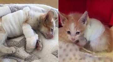 Kitten That Survived Forklift Accident Never Gives Up Fighting And Makes Unlikely Recovery