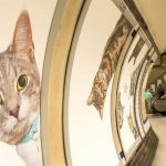 Ads In London's Subway Have Been Replaced With Cat Pictures
