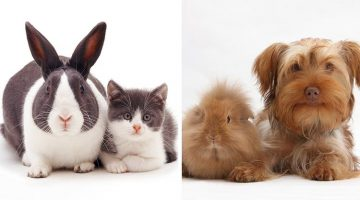 Photographer Takes Pictures Of Animal Brothers From Other Mothers