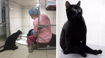 Rescue Cat That Can't Walk Becomes Nurse And Helps Other Animals