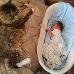 World's Largest Maine Coon Cat Has The Cutest Bond With His Human Brother