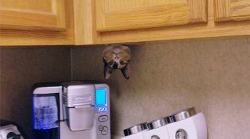 29 Sneaky Cats Who Are Secretly Ninjas