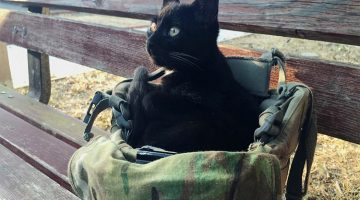 Kitten Chooses Soldier To Be His Forever Human