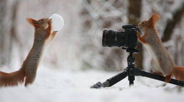 Russian Photographer Captures The Most Adorable Squirrel Photoshoot Ever