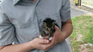Little Stray Kitty Walks Up To Man Requesting To Be Adopted