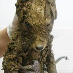 An Unrecognizable Animal Found In Mud Couldn't Be Identified Until They Cleaned Him