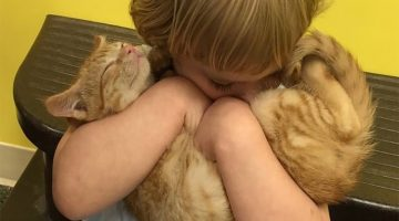 2-Year-Old Girl Rescues Shelter Kitten And They Become Best Friends Forever