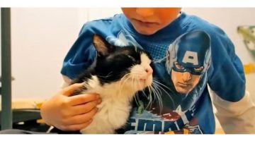 20-Year-Old Cat Found Family And No One Expected How Much Love He Had