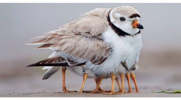 18 Pictures Of Birds Looking After Their Babies