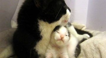 Cat Momma Pulls Through Terrible Trauma To Be With Her Kitten