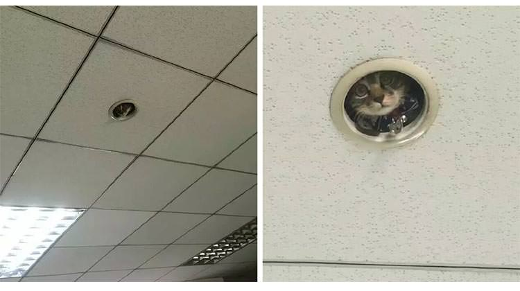 Office Workers Were Surprised When They Discovered A Hilarious Cat Spying On Them