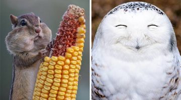 The 15 Funniest Pictures From The 2016 Comedy Wildlife Photography Awards