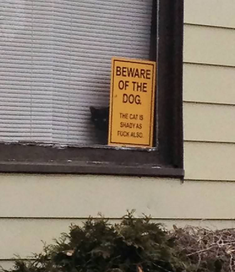 15 Most Dangerous Dogs Behind Beware Of Dog Signs Top13