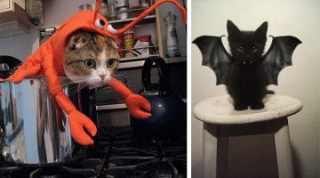 18 Of The Cutest, Most Terrifying Cat Costumes For Halloween