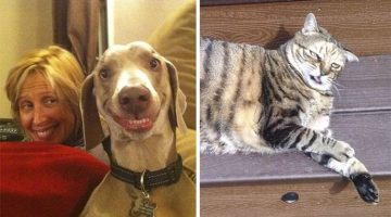 19 Hilarious Non-Photogenic Animals That'll Boost Anyone's Mood