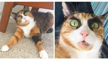 Cat With Crazy Eyebrows Looks Like She's Always Judging You And It's Hilarious