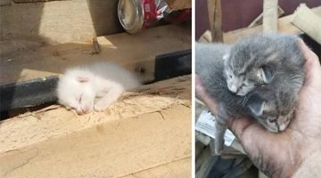 Man Spent 7 Hours Digging Through Trash To Save Kittens In Dumpster