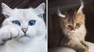 12 Of The World's Most Beautiful Cats