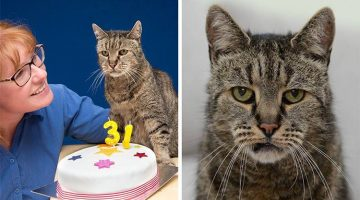 Oldest Cat In The World Just Turned 31