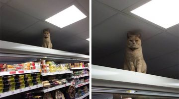Cat Judges Everyone That Comes Into This London Supermarket