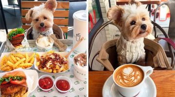 Starving Dog Gets Rescued And Taken To Pet-Friendly Lunch Dates Every Day