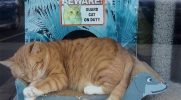Store Owner Saves Cat's Life And Gets a Security Guard In Return