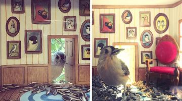 Artist Creates Tiny Houses For Birds That Visit Her