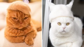 Cats Wearing Hats Made From Their Own Hair