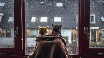 Photographer Takes Adorable Portraits Of Her Cats In Front Of The Windows When It Rains