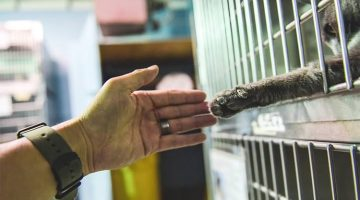 Shelter Cat Reaches Out His Paw To Human Demanding To Be Adopted