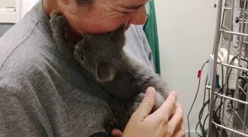 Family Saved Kitten On The Highway And She Won't Stop Thanking Them