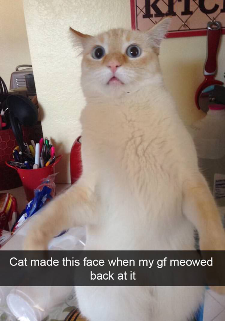 15 Of The Funniest Cat Snapchats | Top13