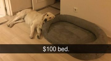 15 Of The Funniest Dog Snapchats