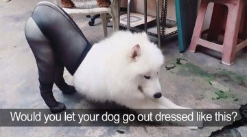 14 Funniest Dog Tweets Of All Time