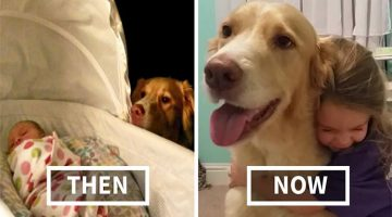 13 Before And After Pictures Of Dogs And Their Humans Growing Up Together