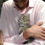 Shelter Kitten Jumps Into Guy's Arms And Chooses Him As Her Forever Human