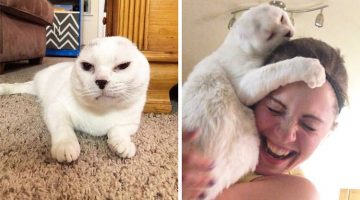 Woman Rescues Earless Cat And They Save Each Other's Lives