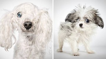 Fashion Photographer Helps Rescue Dogs Find Permanent Homes