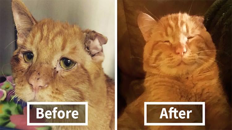 Couple Saved The 'Saddest Cat In The World' From Euthanization And Everything Changed