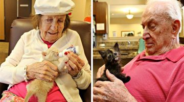 Animal Shelter And Elderly Care Center Come Together To Help Kittens And Elders