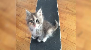 Skateboarder Rescues A Kitten And a Year Later They're The Best Friends Ever