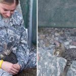 Soldier Rescued Kitten In Afghanistan And Refused To Leave Her Behind