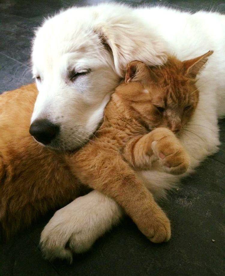 Puppy Tried To Win Over Ginger Cat And A Month Later, They ...