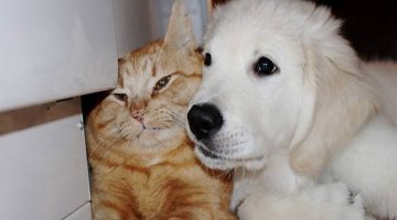 Puppy Tried To Win Over Ginger Cat And A Month Later, They Became Cuddle Buddies