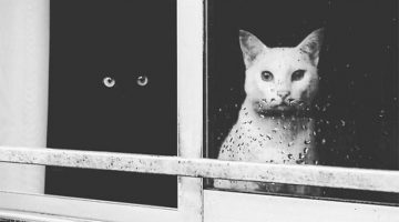 15 Yin And Yang Cats That Look Perfect Together